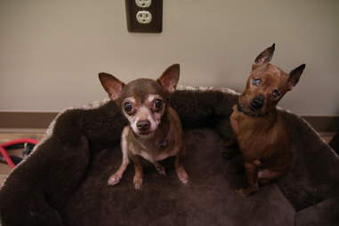 Senior dogs in dog bed