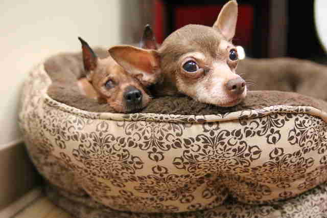 Senior dogs in dog bed