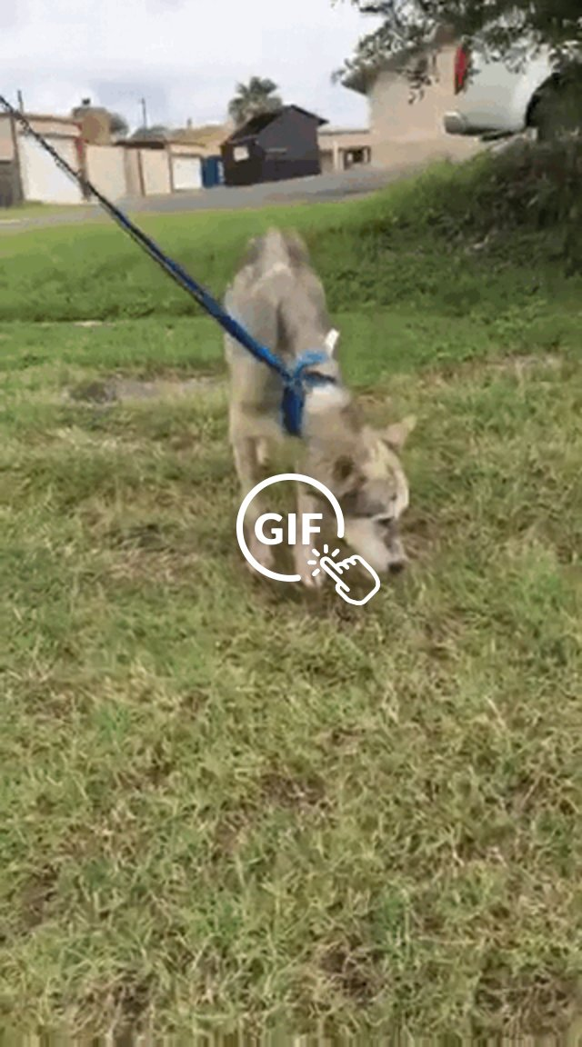 Dog saved from kill shelter goes for walk