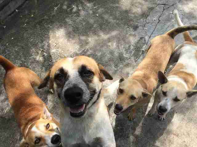 Rescued street dogs in Thailand