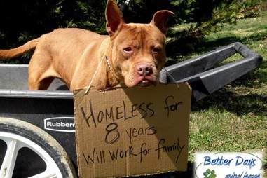 dog homeless for 9 years