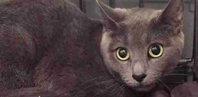 Cat abandoned at NYC shelter doorstep