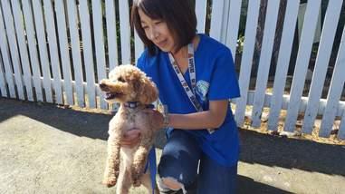 Rescued miniature poodle