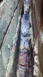 cat stuck between walls