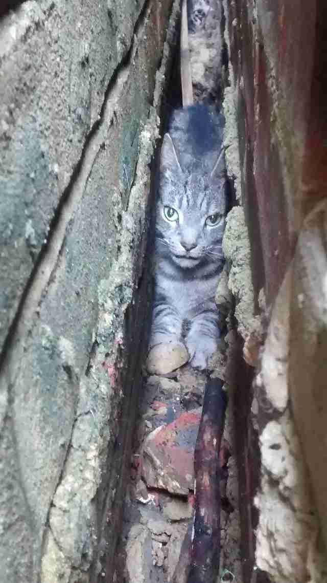 cat stuck between walls