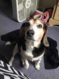 beagle finds new family