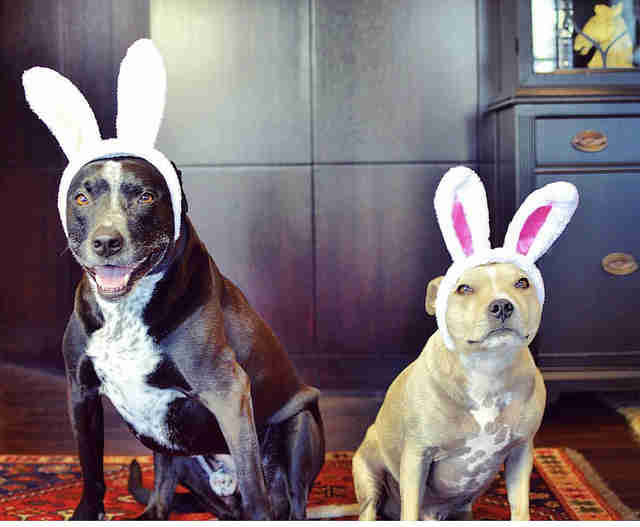 two dogs dressed up as easter bunnies