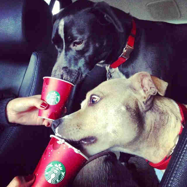 dogs drinking Puppuccinos
