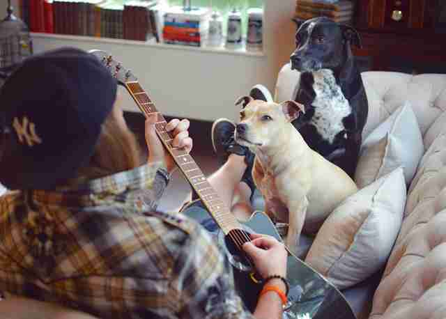 dogs listening to dad play guitar