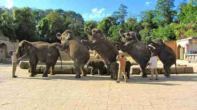 Hanover Adventure Zoo elephants performing a show