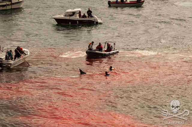 Faroe Islands whale killings
