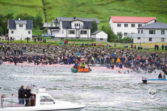 Faroe Islands whale killings