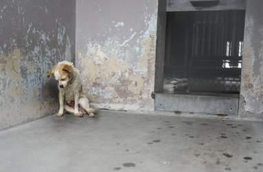 sad shelter dog rescued