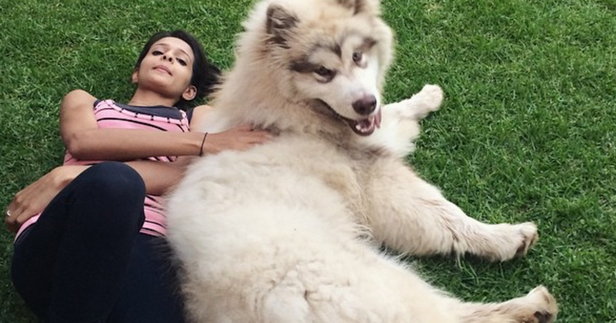 Huge Dog Is Pretty Sure He S A Lap Dog Videos The Dodo