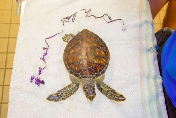 sea turtle balloon