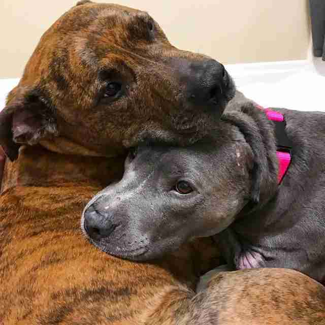 Rescued dogs cuddling together