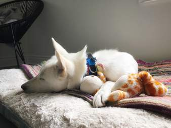 Rescued dog relaxing