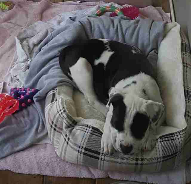Rescued puppy in dog bed