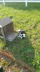 Puppy abandoned in cardboard box
