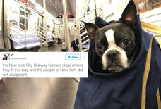 These Dogs in Bags Are NYC's Hilarious Response to the Subway's Dog Rule
