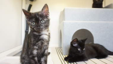 kittens found in a box