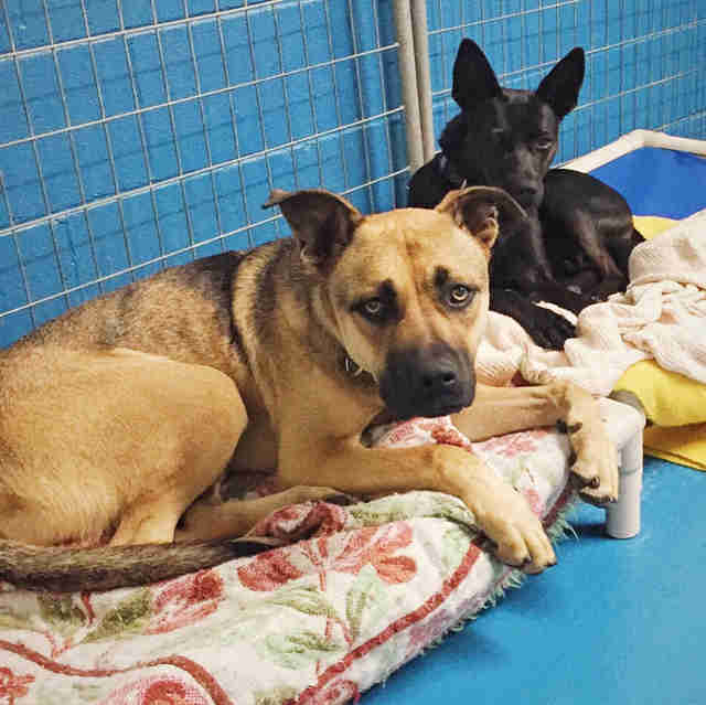 Rescued dogs sharing a kennel