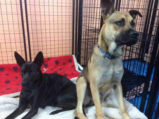 Rescued dogs in kennel together
