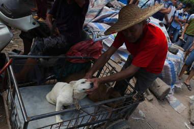 Dog at Yulin dog meat festival