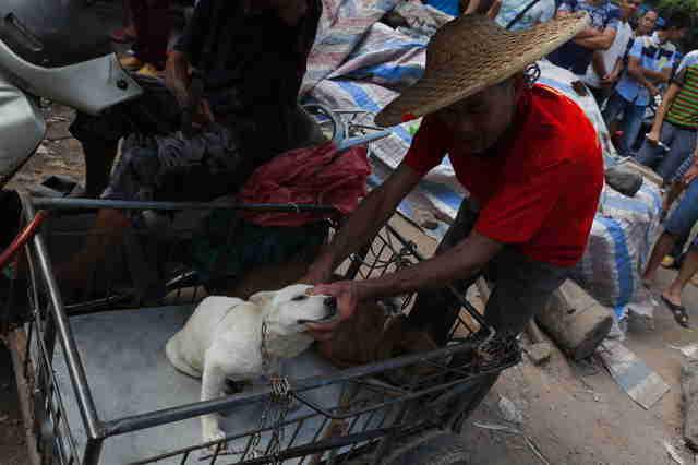 Dog at Yulin dog meat festival