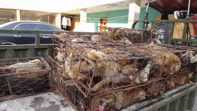 Dogs in cages at the Yulin Festival