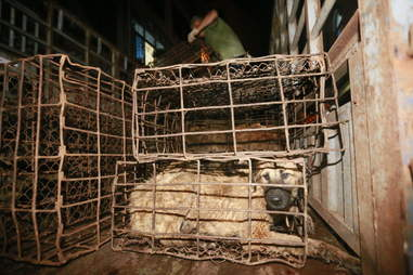 Caged dog at Yulin Festival