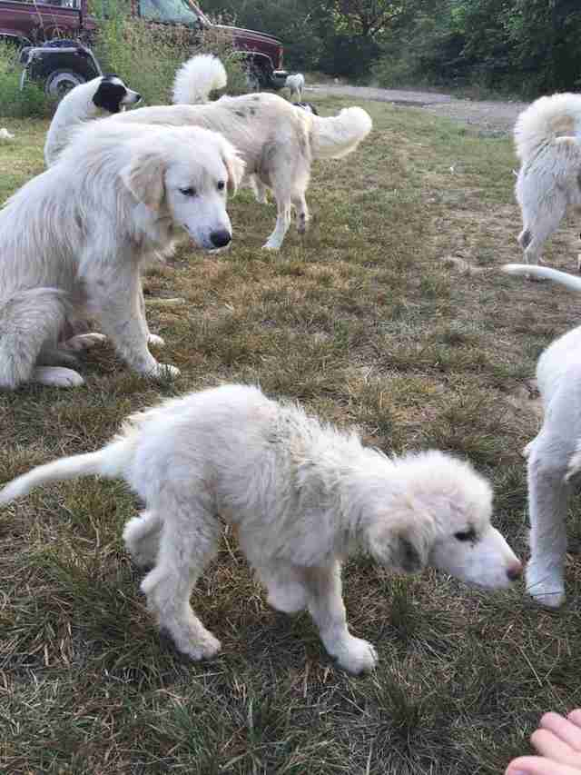 Group of dogs at hoarder's property