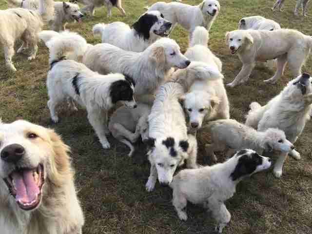 Dogs at hoarder's property