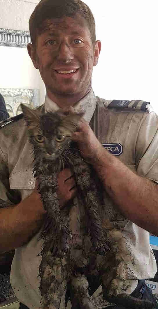 kitten rescued from chimney