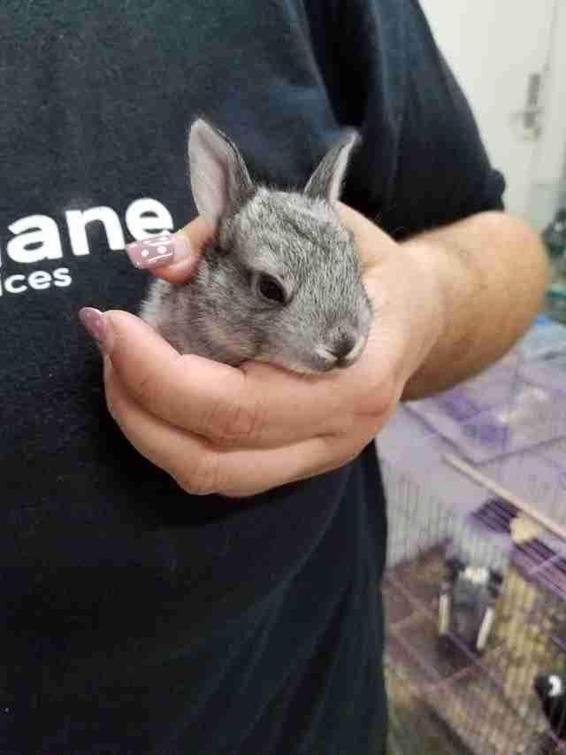 Bunny found in abandoned box truck