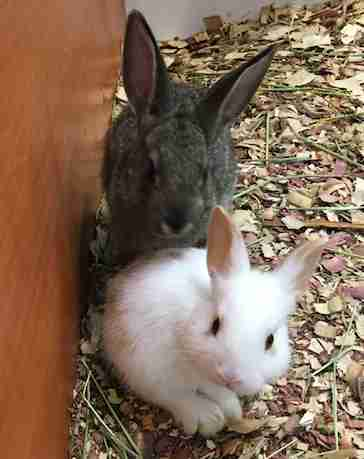 Bunnies saved from hot truck in Fresno County, CA