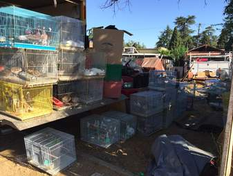 955 small animals found in back of hot truck