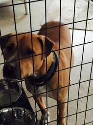 Lonely shelter dog in kennel