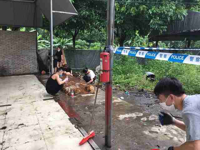 Rescuers helping dog meat dogs