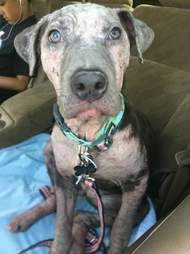 Rescued dog in car