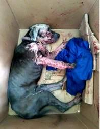 Dog taped inside cardboard box