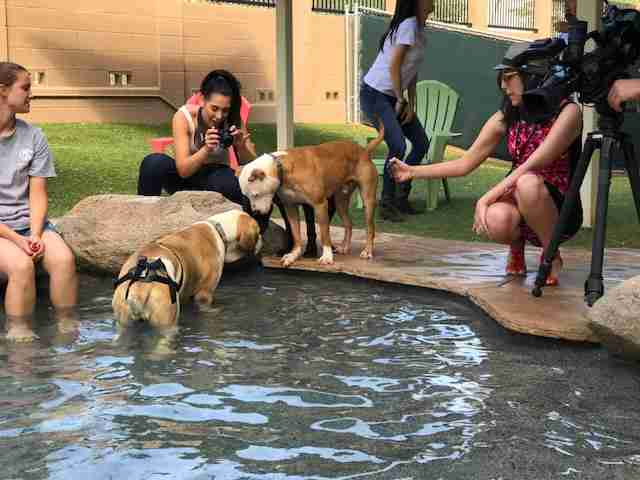 shelter dog pool party