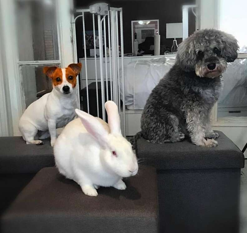 Two dogs and bunny