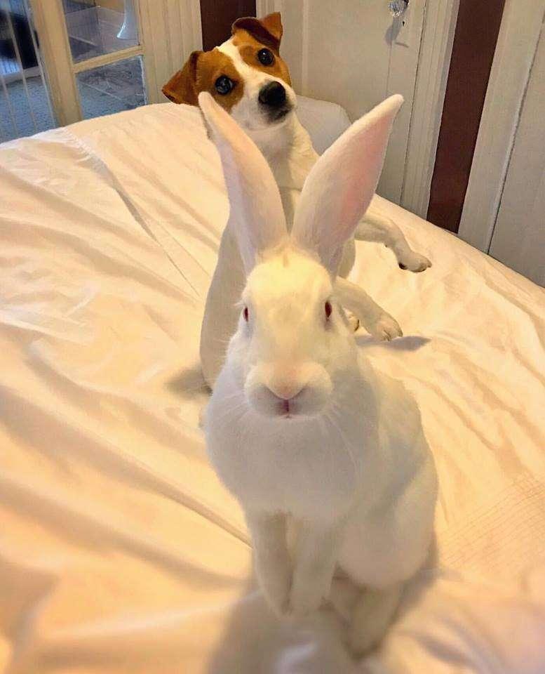 Bunny and dog