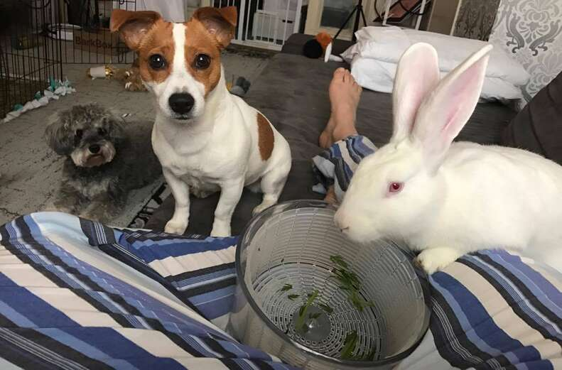Bunny and two dogs