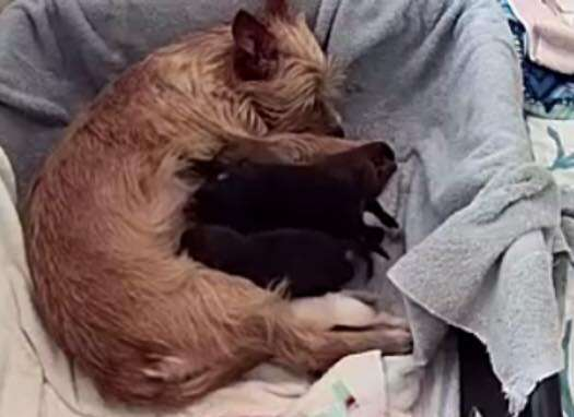 Dog cuddling with puppies