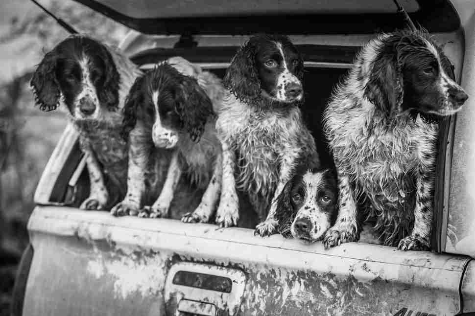 DPOTY Dogs at Work 2nd © Lucy Charman The Kennel Club