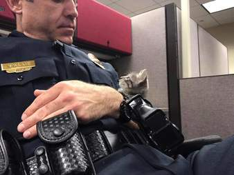 cop rescues kitten