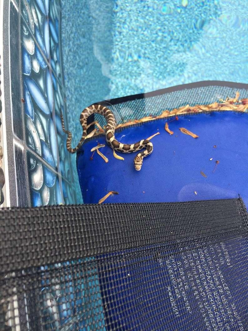 Endangered snake saved by FrogLog