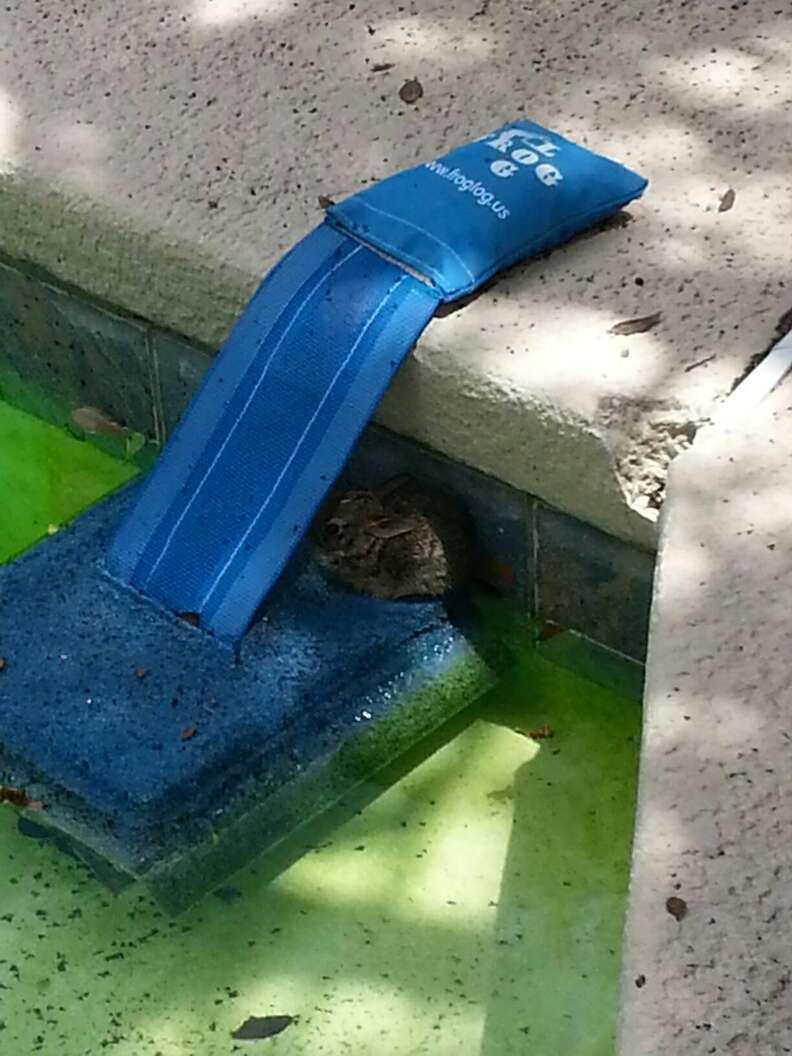Rabbit saved by FrogLog
